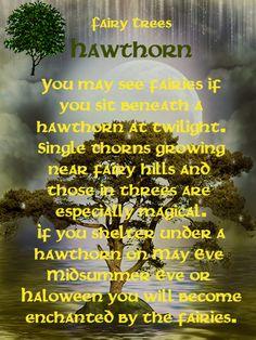 Fairy Tree - Hawthorn