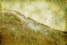 https://flic.kr/p/nPGU8U   Foggy Mountain Morning    I used two of my own textures: Billowy and Vegan Birds from Distressed Jewell  You can find textures…