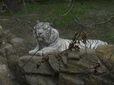 Fort Worth Zoo Fort Worth Zoo, Animals, Animales, Animaux, Animal, Animais
