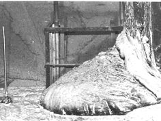 """Manmade Corium Lava """"The Elephants Foot"""" Spilling From Unit 4 of the Chernobyl Nuclear Power Plant April 26, 1986"""