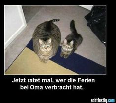 Jetzt ratet mal, wer die Ferien bei Oma verbracht hat. Cute Animal Memes, Funny Animal Pics, Animal Humour, Animal Funnies, Funny Cute Cats, Fat Cats Funny, Cute Funny Animals, Cute Baby Animals, Funny Cat Compilation