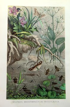 1892 Antique german Aquatic insects engraving by LyraNebulaPrints