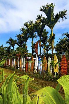 """Hawaiian recycling!"" by Cj Kale, via 500px."