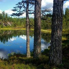 Good morning! 😃  #summer #happy_days #august #beautiful #outdoor #adventure #landscape #nature #lake #trees #footpath #walking #fishing #eating #living #loving #utpåtur #hyttetur #fottur #fisketur #nortrip #nordicnature #visitscandinavia #norgesperler #southnorway2day #norwayraw #visitnorway #visittelemark #utno #tbno