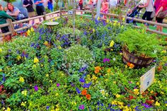 Butterflies on the Go Garden at the 2015 Epcot International Flower & Garden Festival at Walt Disney World Resort