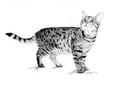 "Tabby Cat Art B/W Print in 8""x10"" Mat from Original Graphite Pencil Drawing by P. Tarlow"