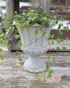 Drivhus - Greenhouse - Chic Antique - Havets Sus - Grøn - Green - pletteriluften - pletter i luften - havetssus