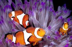 Clown fish. So cute.