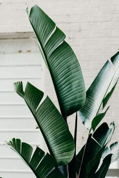 41 Super ideas for plants wallpaper iphone leaves tropical