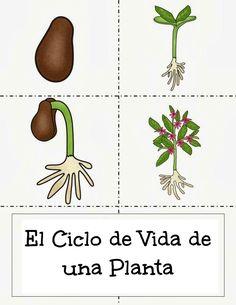 Menta Más Chocolate - RECURSOS PARA EDUCACIÓN INFANTIL: Plantas: Ciclo Vital