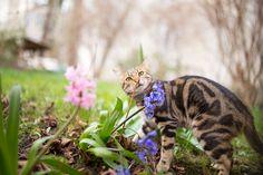 Katze erschnuppert Frühblüher
