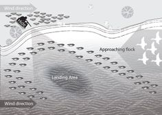 duck decoy spreads | It is available from the DPI website.