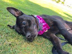 10/14/16 BLACKY - Nearly blind dog