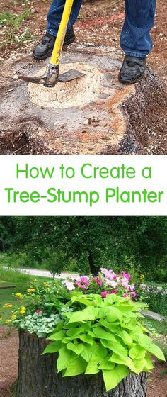 How to Create a Tree-Stump Planter
