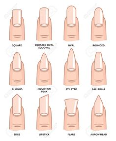 Illustration of Different nail shapes Fingernails fashion Trends vector art clipart and stock vectors. Image The post Illustration of Different nail shapes Fingernails fashion Trends vector art c appeared first on nageldesign. Stylish Nails, Trendy Nails, Cute Nails, My Nails, Grow Nails, Summer Acrylic Nails, Best Acrylic Nails, Spring Nails, Squoval Acrylic Nails