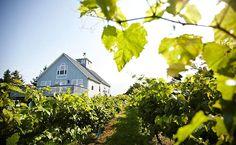 Treat your tastebuds to some delicious CT wine at Miranda Vineyard in Goshen, CT.