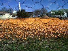 Loeriesfontein in Spring Amazing Photos, Cool Photos, Art Forms, Vineyard, Pumpkin, Artists, Spring, Photography, Outdoor