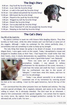Dog's Diary v. Cat Diary