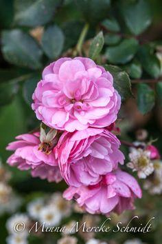 Blomsterverkstad: Blommor i min oktoberträdgård!