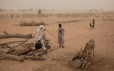 Chadian men and boys use a donkey to pull up water, (the quality of which is only suitable for animals to drink) from a well which took twenty men a week to dig by hand, in a wadi near Tchyllah, a desert village in the Sahel belt of Chad, April 19, 2012. (Ben Curtis/Associated Press) #