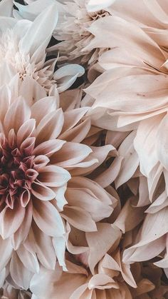 Flower Phone Wallpaper, Iphone Background Wallpaper, Aesthetic Iphone Wallpaper, Aesthetic Wallpapers, Pink Wallpaper, Spring Flowers Wallpaper, Vintage Flowers Wallpaper, Aztec Wallpaper, Screen Wallpaper