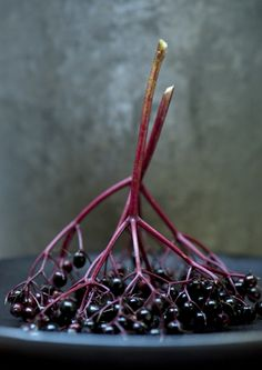 Elderberries. We used to pick these by the bushels to sell for extra cash in the fifties!