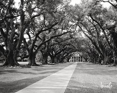 Louisiana Oak Alley Plantation Photograph