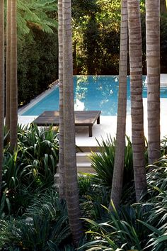 Tropical garden around pool Tropical Garden Design, Tropical Landscaping, Backyard Landscaping, Porches, Kentia Palm, California Palm Trees, Outdoor Living, Indoor Outdoor, Pool Water Features