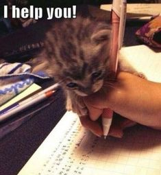 30 Funniest Cat Memes - Funny Baby - 30 Funniest Cat Memes Cats memes The post 30 Funniest Cat Memes appeared first on Gag Dad. Baby Animals Pictures, Cute Animal Photos, Funny Animal Pictures, Funniest Cat Memes, Funny Cat Memes, Funny Cats, Funny Quotes, Memes Humor, Baby Animals Super Cute