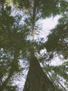 Ladies and gentlemen and non-binary pals, can we just have a round of applause for the forest??? 👏👏👏👏👏👏👏👏👏👏 Forest Adventure, New Forest, Greatest Adventure, Pacific Northwest, Constellations, Evergreen, Paths, Star Constellations