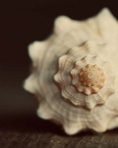 Conch Shell-I loved listening to the sea through my Conch Shell! - MCBL