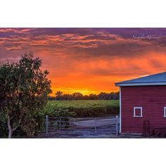If you get nothing more out of the 40 Week Journey than the feeling that when you're in Wine Country....you're 'in the country' I'll be happy! #ig_countryside #tgif_nature #tgif_sunset #ig_sunrisesunset #visual_heaven #superhubs #world_bestsky #nature_skyshotz #worlderlust #fotofanatics_nature #loves_landscape #naturelover_gr #fotocatchers #natures_hub #nature_of_our_world #rsa_nature #nature_wizards #nature_sultans #nature2000 #kings_transport #jj_skylove #nature_perfection #igworldquest…