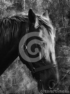 Close-up portrait of a portrait horse