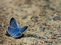 Butterfly by idaeliasson88