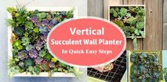 Vertical Succulent Wall Planter In Quick Easy Steps | DIY Succulent Frame
