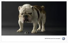 35 Divertidos y originales anuncios publicitarios realizados con perros | TodoGraphicDesign