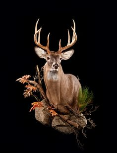 African Hunt Trophy Gallery-Big Game Taxidermy Mounts