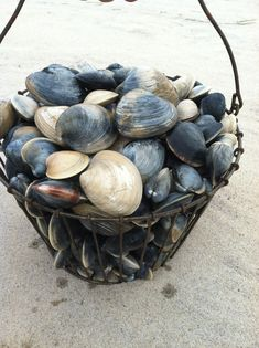 collecting shells from the sand and sea when running on the beach! Cottages By The Sea, Beach Cottages, Marie Galante, Ivy House, Coastal Living, Cape Cod, New England, Sea Shells, Elder Scrolls