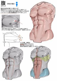 Hoarding all the tutorials >:T — anatoref: How to Draw Abdominals Top Image…