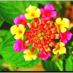 Exotic flower Perennial Flowering Plants, Perennials, Exotic Plants, Flower Pictures, Flower Images, Flower Ideas, Pretty Flowers, Little Flowers, Unusual Flowers