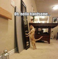 Oh, Hello Handsome
