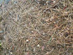 Tahoe Textures - Pine needle carpet / http://www.sleeptahoe.com/tahoe-textures-pine-needle-carpet/