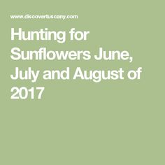 Hunting for Sunflowers June, July and August of 2017