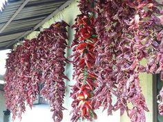 Fűszernövények házi tartósítása - Szépzöld