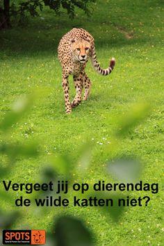 World Organizations, Site, Cheetahs, Big Cats, Om, Cute Animals, Gatos, Pet Dogs, Pretty Animals