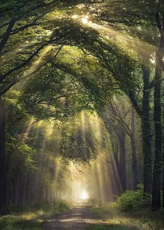 58 ideas for nature forest trees wood roads Beautiful World, Beautiful Places, Beautiful Forest, Beautiful Beautiful, Beautiful Flowers, Forest Path, Forest Scenery, Forest Light, Magic Forest