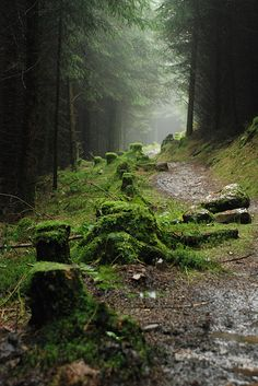Singletrack through Afan Forest ... to walk among giants