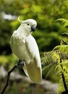10 Most Beautiful Parrot Species in the World - Tail and Fur Small Birds, Pet Birds, Colorful Birds, Animals And Pets, Cute Animals, Wild Animals, Parrot Wallpaper, Australian Parrots, Birds Online