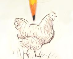 How to draw a chicken from Scratch and Peck Drawing Lessons, Art Lessons, Cat Drawing, Drawing Sketches, Painting & Drawing, Painting Tricks, Sketching, Chicken Drawing, Chicken Art
