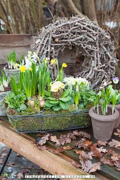 spring bulbs in bloom in vintage pots with twig wreath Trädgårdsflow